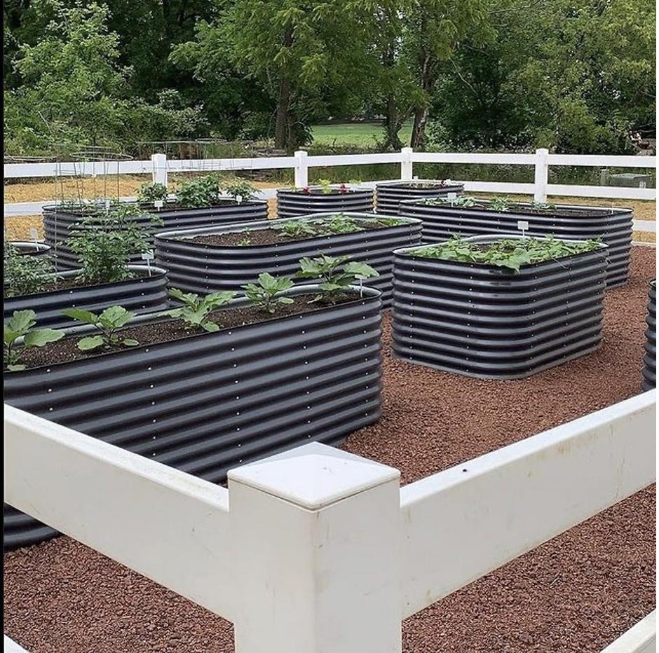 Metal raised garden beds: Vego Garden vs Birdies