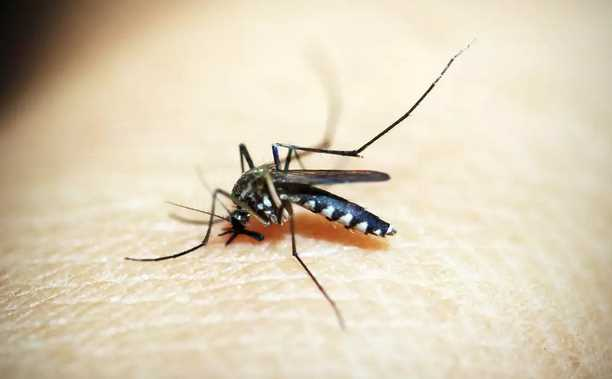 Top 8 Mosquito Control Killers